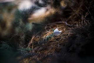 צילום איטי- סדנת צילום והקשבה